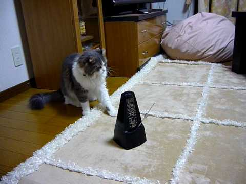 ビート刻んでるwメトロノームとじゃれる猫がやばい