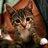 2017年1月にTwitterで話題となった『おもしろ猫』集めました。