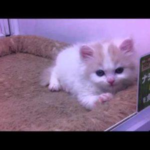 かわいい猫の画像【画像集】(子猫 猫 癒し かわいい 猫派 好き
