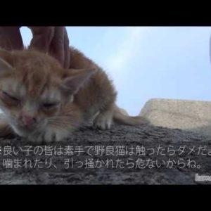 汚い子ネコを見つけたので虐待することにしたというタイトルに釣られて。かわいい子猫動画集