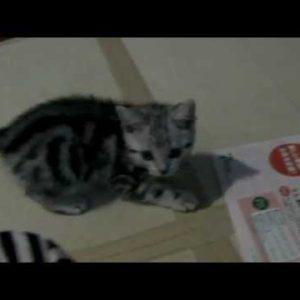かわいすぎる!愛くるしい子猫たちの動画一覧