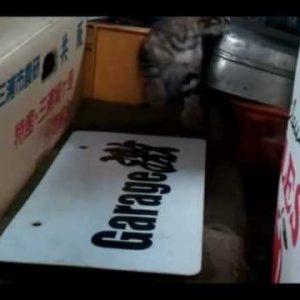 車庫にいた子猫を隠し撮り◯◯な行動に癒やされる