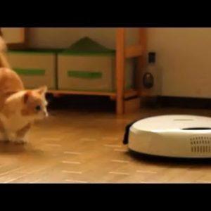ロボット掃除機と猫動画
