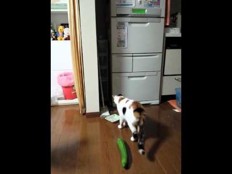 驚かせすぎないで!「猫がキュウリで跳びはねる」のには深刻な理由があった…
