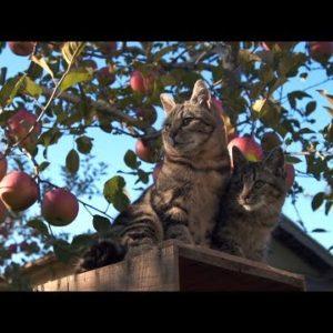 犬映画もいいけど猫もいい!今秋公開される猫映画に注目。