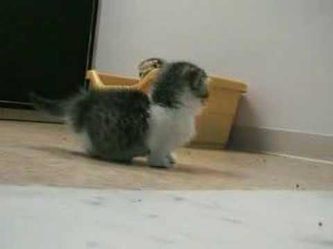 癒されたいヒトのためのネコ動画