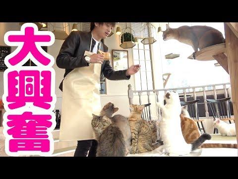 のぞき見♡猫カフェ未経験者と猫好きさんに捧ぐ「猫カフェ」ってこんなとこ動画集