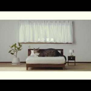 """""""ネコ×家具=「ネコ家具」""""!?動画再生回数40万回突破で話題の「ネコ家具」が…東京にもやってくる!"""