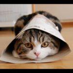 専門家が警告! セレブにも『超人気のあの猫』に、もう会えなくなる?