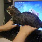 【愛らしいぬこ達の】猫ちゃんのキャットファイトで和もう~♡【愛らしいバトル~】